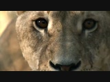 World's Deadliest _The Pack_ Lions